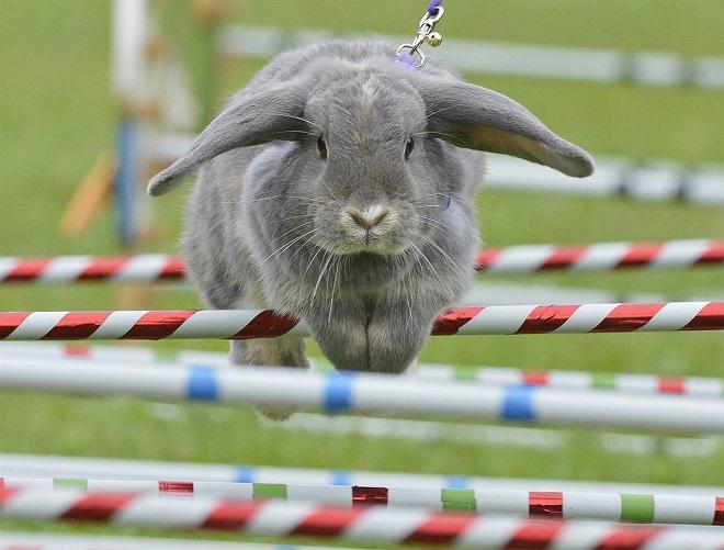 Кролики ставят рекорды и удивляют