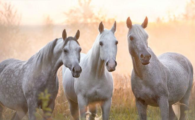 Лошади - удивительные грациозные животные
