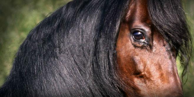Объёмные глаза лошади в 9 раз больше человеческих