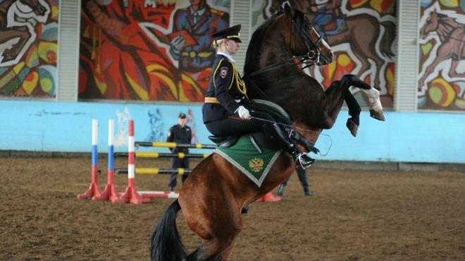 Спортивное выступление коня-полицейского