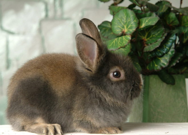 Кролик нюхает цветок