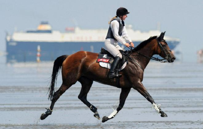 Естественный аллюр лошади - рысь