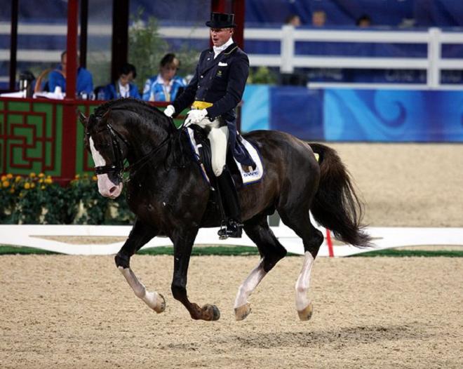Естественный аллюр лошади - галоп