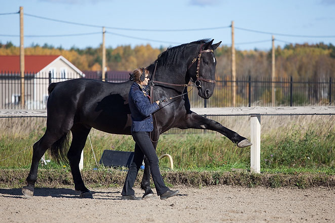 Испанский шаг - искусственный аллюр лошади