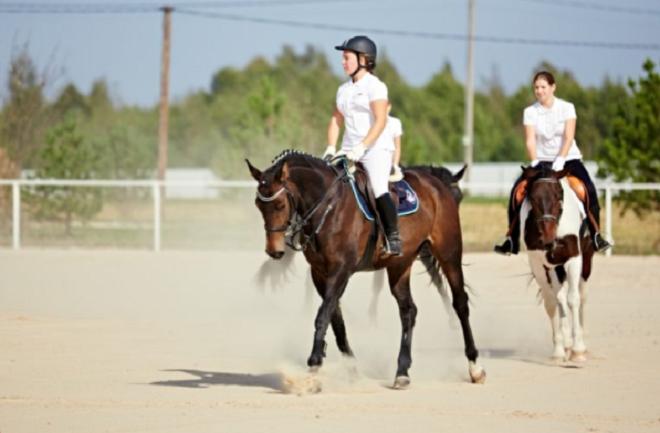 Естественный аллюр лошади