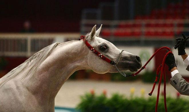 Щучий профиль лошадиной морды
