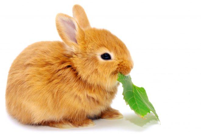 Декоративные кролики очень востребованны сегодня
