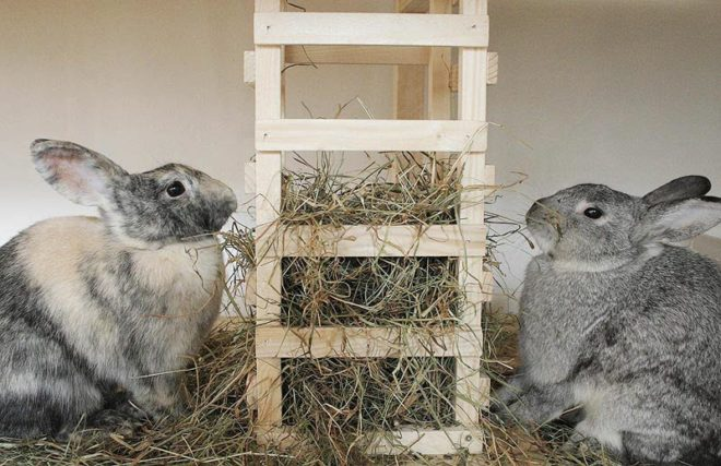 Декоративным кроликам необходимо сено