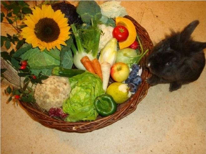 Кроликам необходимо давать полезные для них овощи