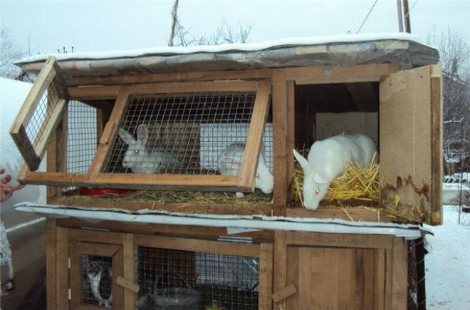 Зимой кроликам необходимо полноценное питание
