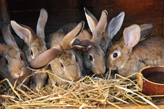 Сено зимой - основа рациона кроликов