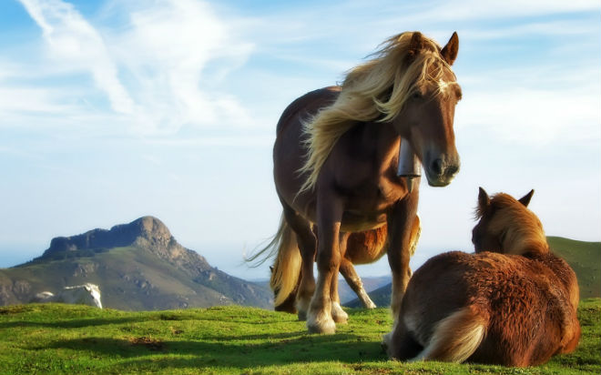 Иппология – это наука, изучающая лошадей