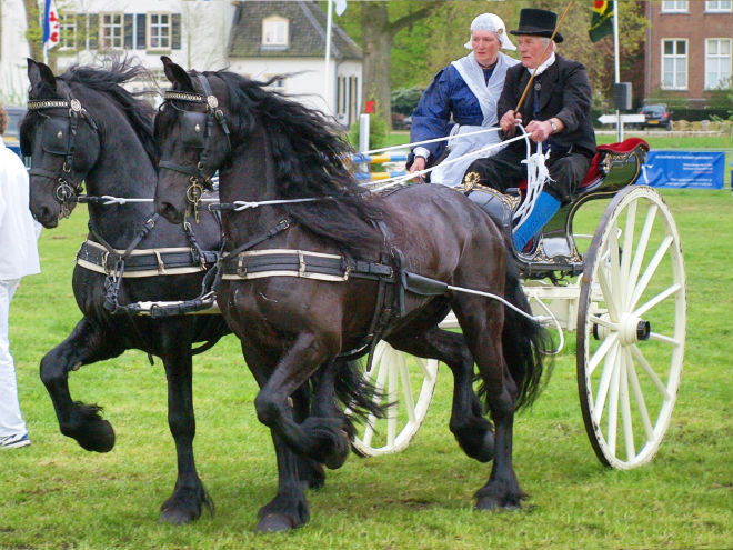 Порода лошадей из голландской провинции Фрисландия