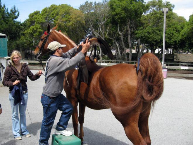 Правильная последовательность седловки лошади