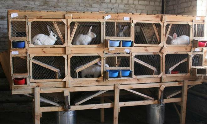 Кроликов разводят из-за вкусного мяса и меховой шкурки