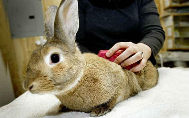 Важно правильно ухаживать за кроликами