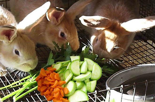 Кролики должны иметь полноценное питание