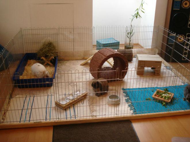 Декоративному кролику комфортно в вольере
