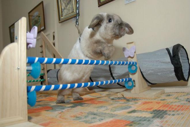 Декоративные кролики поддаются дресировке