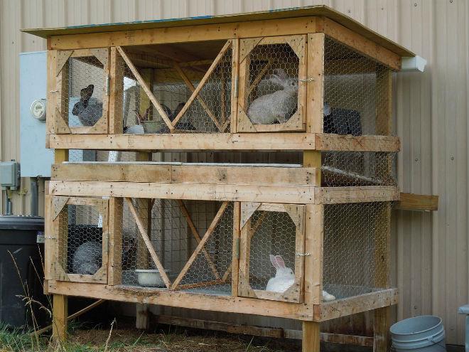 Специальные клетки для кроликов можно сделать самостоятельно