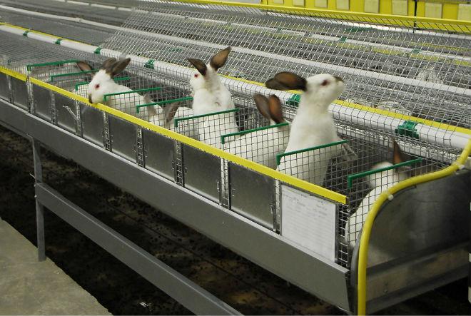 Кролиководство - перспективная отрасль животноводства