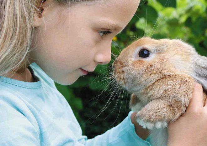 Важно, чтобы кролик вас узнал