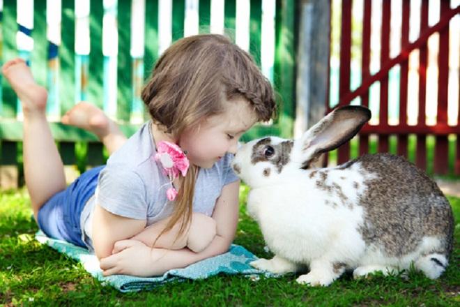 Лаской можно снизить враждебность кроликов