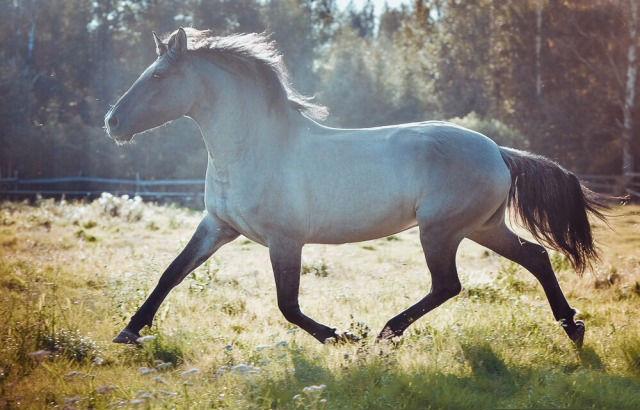 Конь мышастой масти великолепен