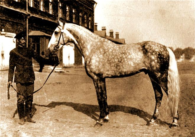 Выведение орловской породы началось в 18 веке