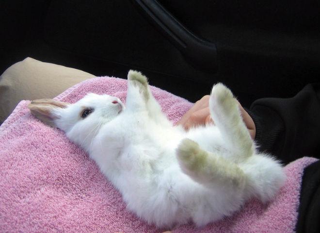 Пол у крольчат определяют с двух месяцев