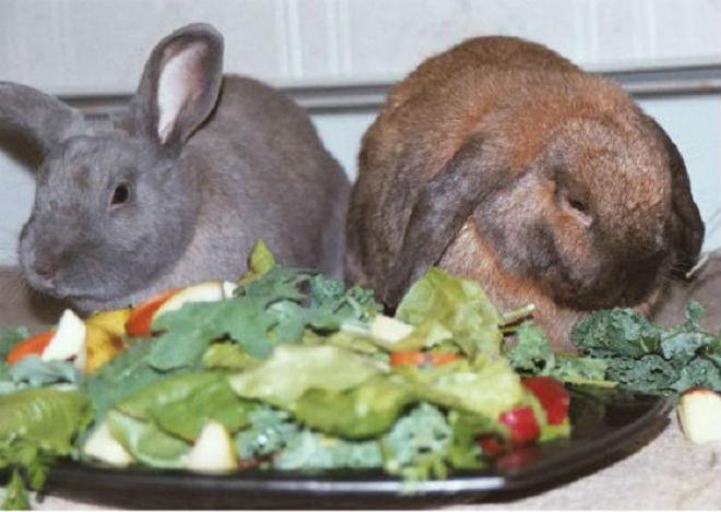 В период спаривания кролики требовательны к составу пищи