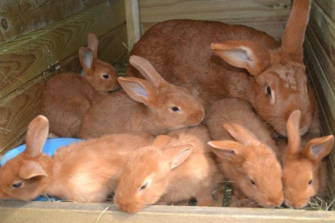 Не стоит выбирать родителей от одной крольчихи
