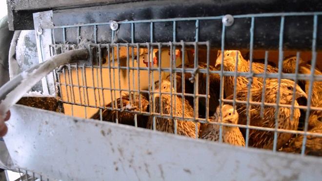При заселесении птиц в клетки, обратите внимание на вид птиц