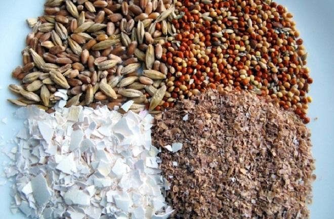 Обеспечьте птицам корм, богатый на витамины и микроэлементы