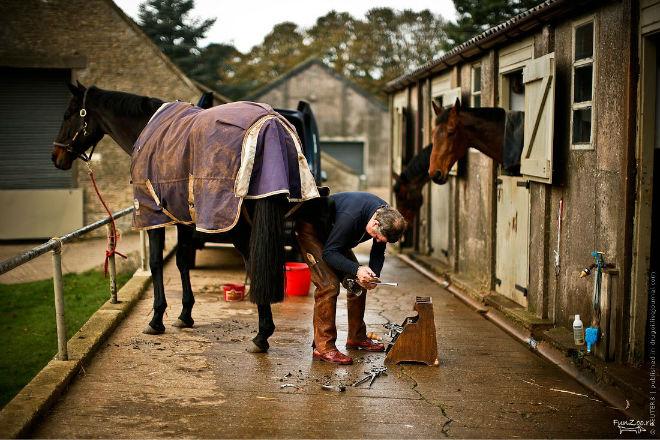 Процедура подковывания лошади состоит из пяти этапов