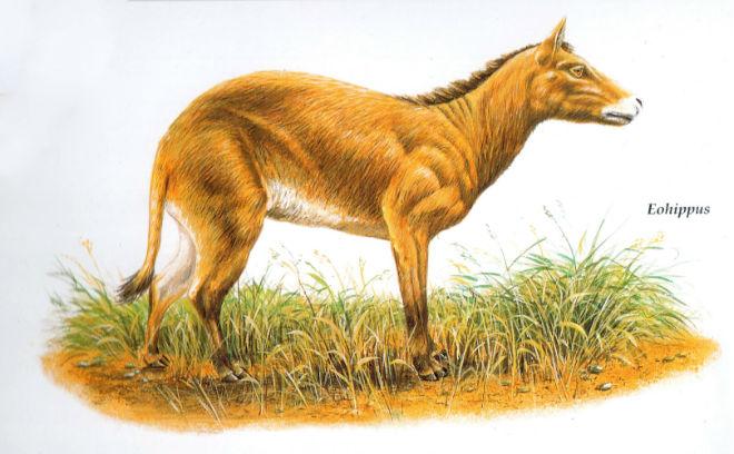 Эогиппус - самый древний предок лошадиных