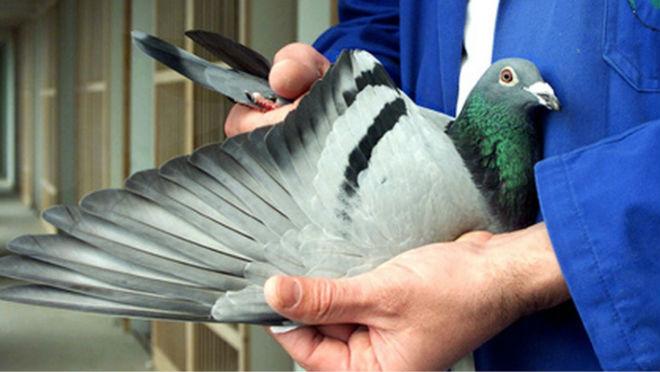Осмотр птицы при покупке