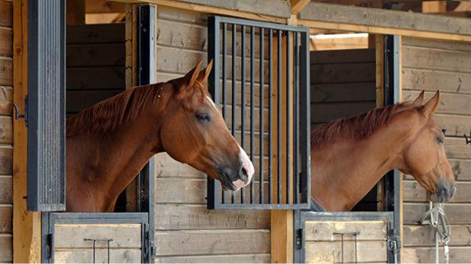 Разведение лошадей прибыльно, но требует капитала и знаний
