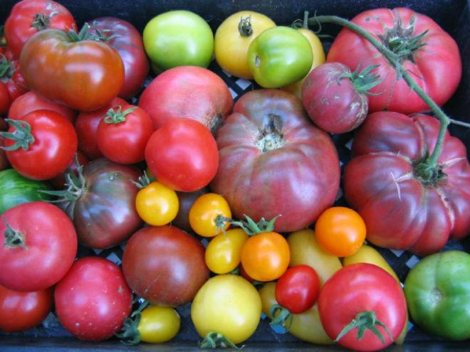 Сладкие сорта томатов любимы огородниками