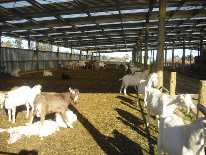 Летний навес для коз