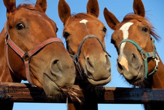 Стоимость покупки и содержания лошадей высокая