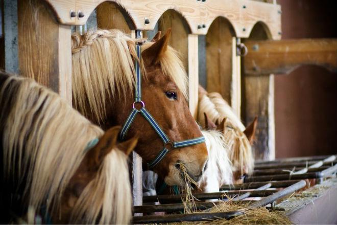 На содержание лошадей тратится много денег
