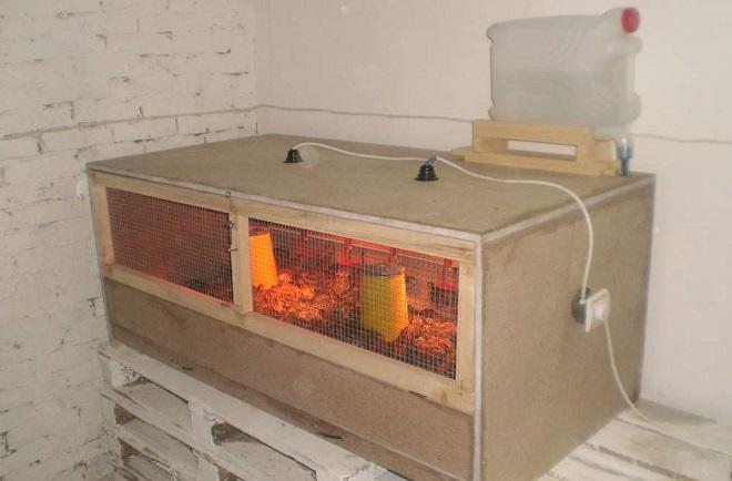 Для птенцов в брудер нужно уложить опилки и утеплить