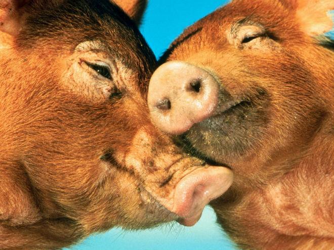 К спариванию животных нужно подходить ответственно