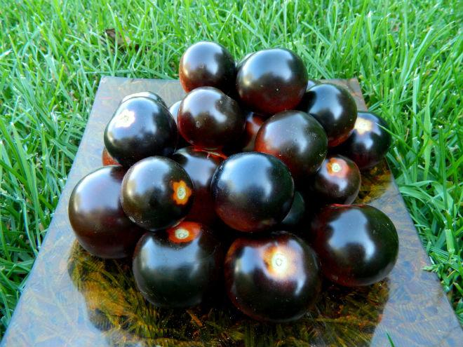 Плоды томата Черная гроздь