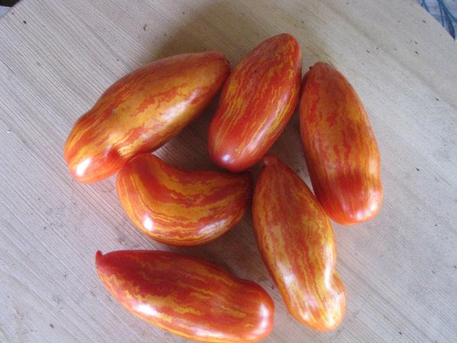 Сорт томата Безумие Касади перцевидной формы