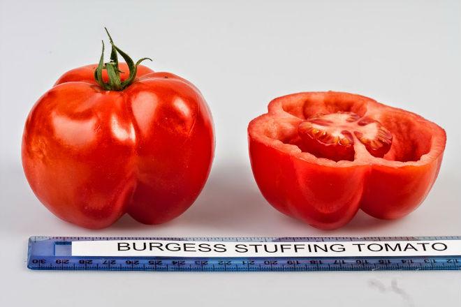 Перцевидный томат Мещанская начинка хорош для фаршировки