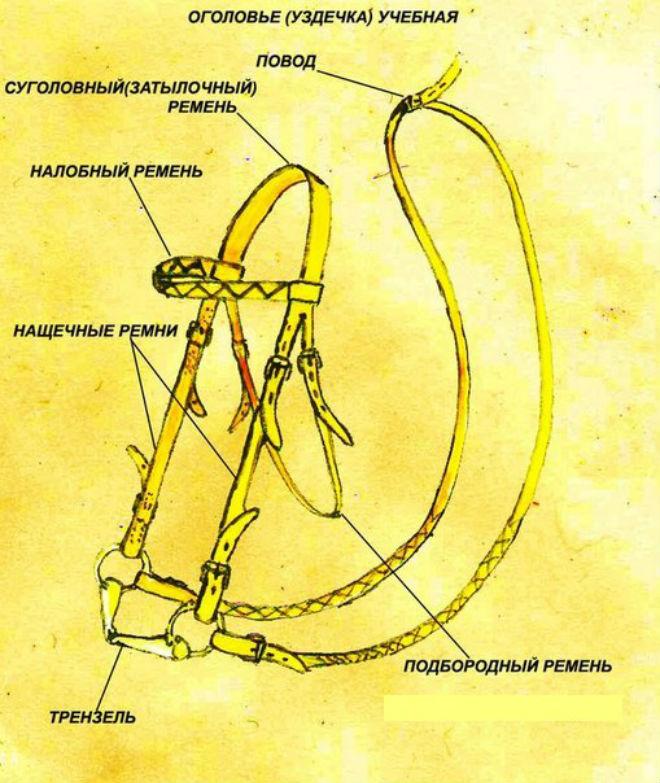 Схема основных элементов уздечки