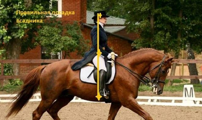 Основа езды на лошади - правильная посадка