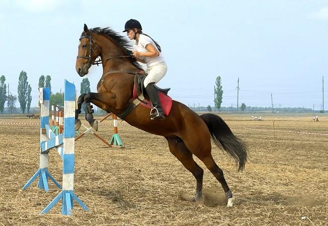 Резкие движения и неточные команды вызовут неповиновение лошади
